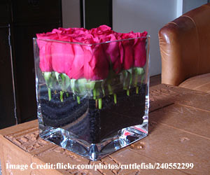 Square-glass-vases