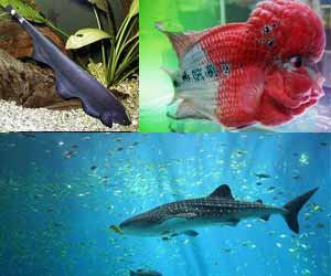 Taraporewala Aquarium Explore The Colourful World Of Marine Life